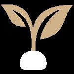 plant based melanin60 skincare